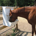 One Feed, One Healthier Horse