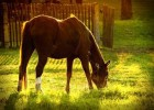 Equine Nutrition With No Grain