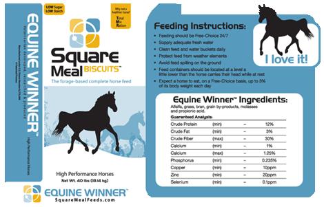 Equine Winner